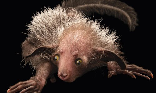Meet the aye-aye, the world's weirdest primate