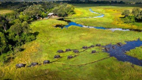 Reclaiming the African Safari with Beks Ndlovu - Worth