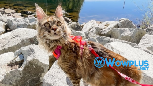 These adventure cats bring joy to their owners — and social media followers