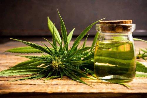 L'huile de chanvre : l'une des huiles végétales les plus nourrissantes pour les cheveux   Ô Magazine