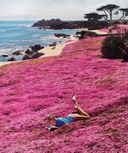 8 Great Monterey California Activities (and Eats)