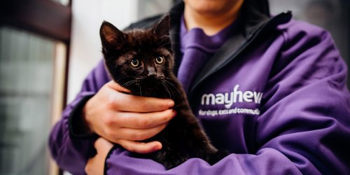 Mayhew Announces Leadership Change and Boost for International Animal Welfare Programme - Katzenworld