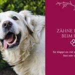 Zähneputzen beim Hund – 5 Tipps, die dein Vierbeiner lieben wird
