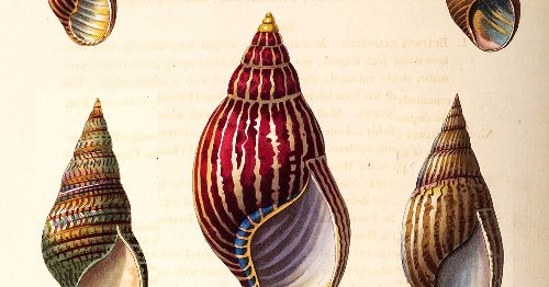 Conchology, or, the Natural History of Shells: Stunning 19th-Century Illustrations from the World's First Pictorial Encyclopedia of Mollusks
