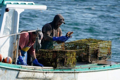 Regulators are using underwater drones to enforce lobster trap rules