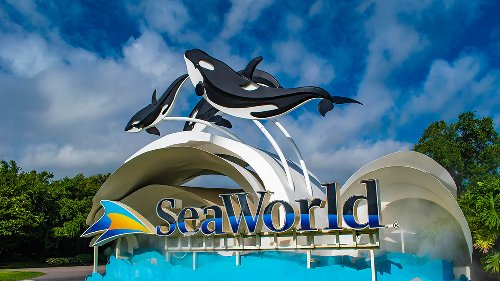 SeaWorld Roller Coasters, Rides Now Open Again