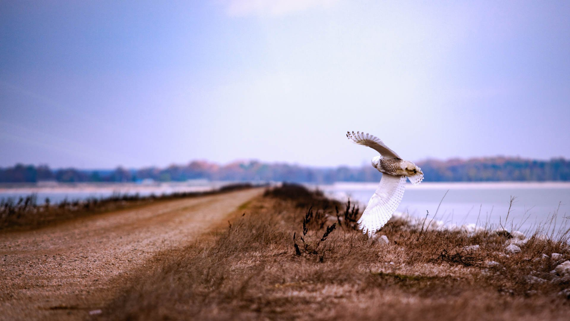 Is Baiting Wild Birds For Photography Ethical?