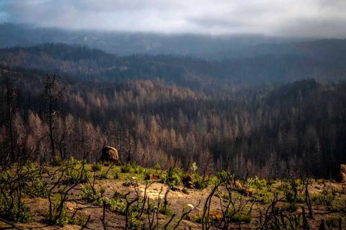 Burned but alive: Time will heal park's wounds, but it needs big money, too