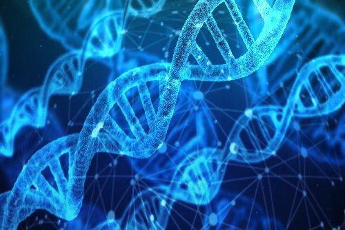 CRISPR : comment remplacer une partie du code génétique ?