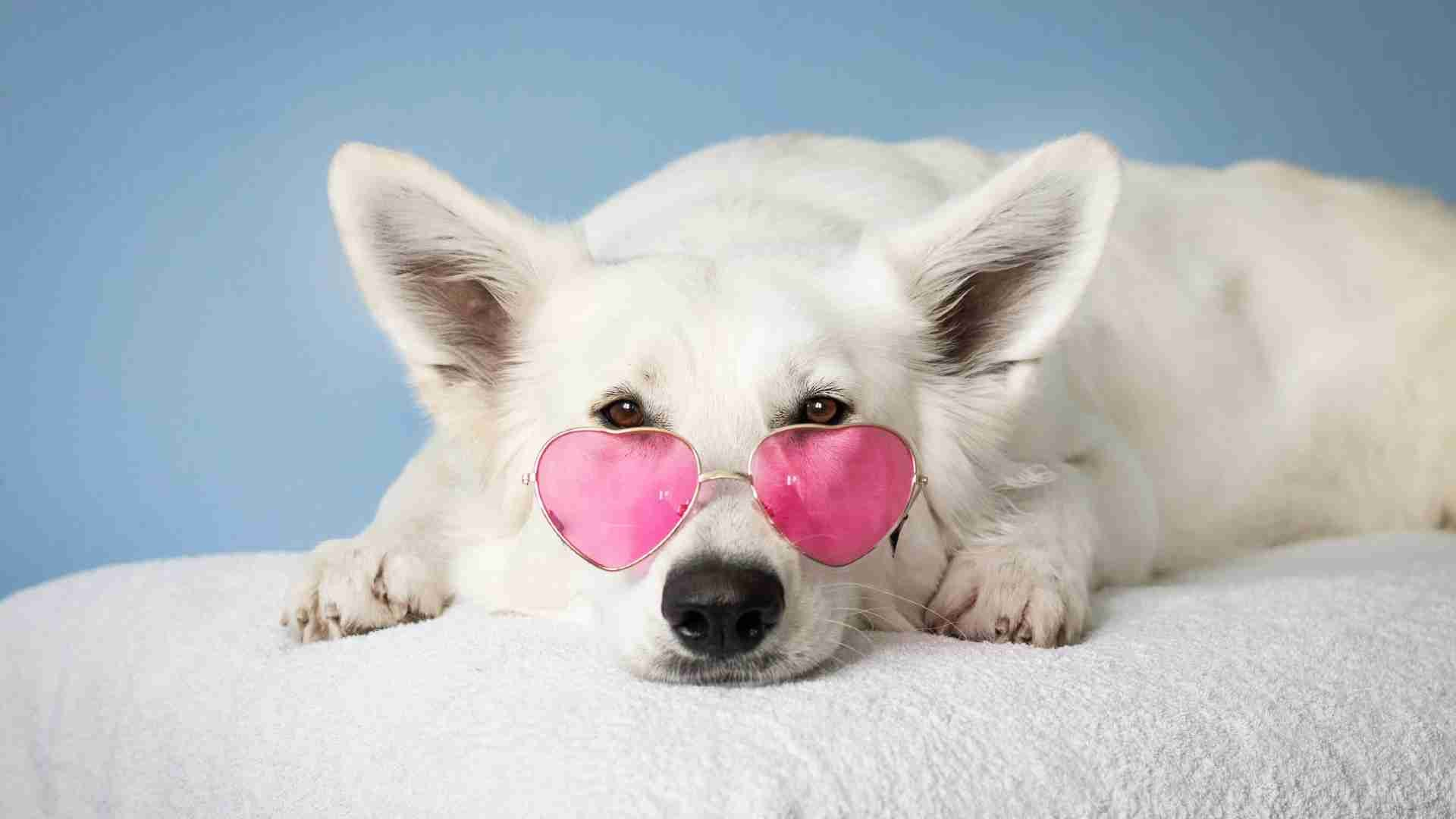 Best CBD Oil For Dogs 2020: Reviews & Buyer's Guide