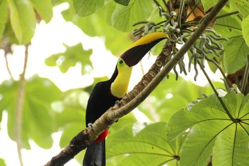 Top 7 Places For Wildlife in Costa Rica National Parks