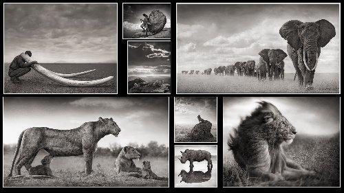 On Photography: Nick Brandt, 1964-present | Photofocus