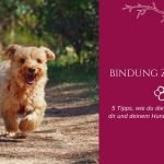 5 Tipps für eine bessere Bindung zu deinem Hund