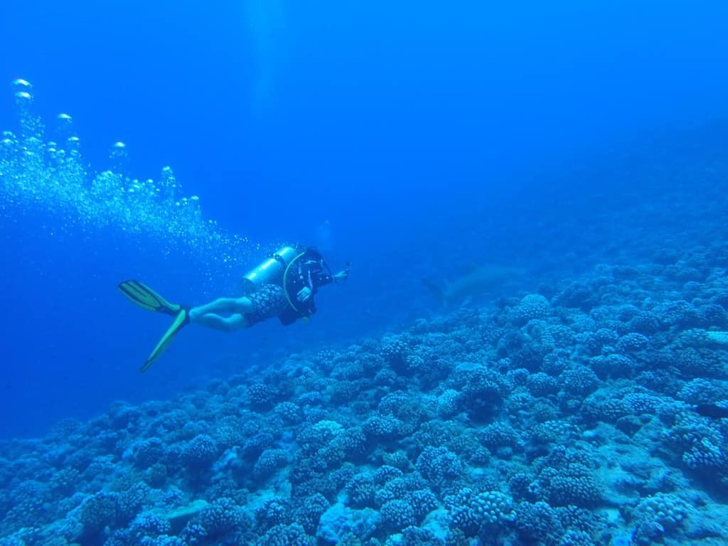 SCUBA DIVING THE WORLD! - cover
