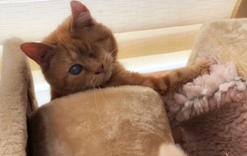 Not Purrfect but Worth it: Blind One-Eyed Rescue Cat Starts a New Life in Sussex - Katzenworld