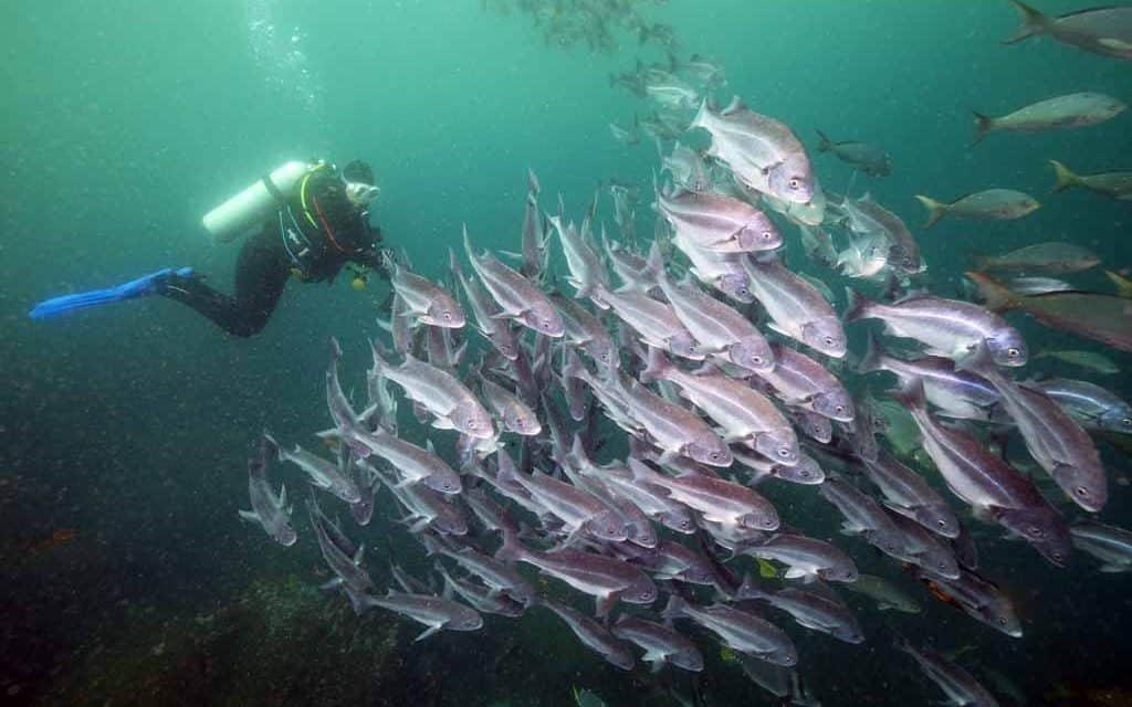 Galapagos: Enchanting Islands! - cover