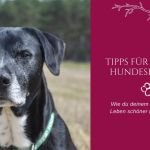 Tipps für gesunde Hundesenioren