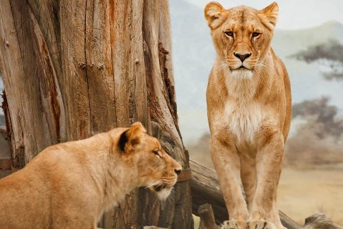 Africa: 10 Must-See Animals on a Safari