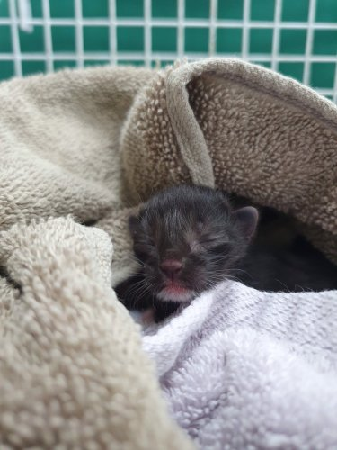 RSPCA Rescued one Day old Kitten Found Alone in Dulwich Garden - Katzenworld
