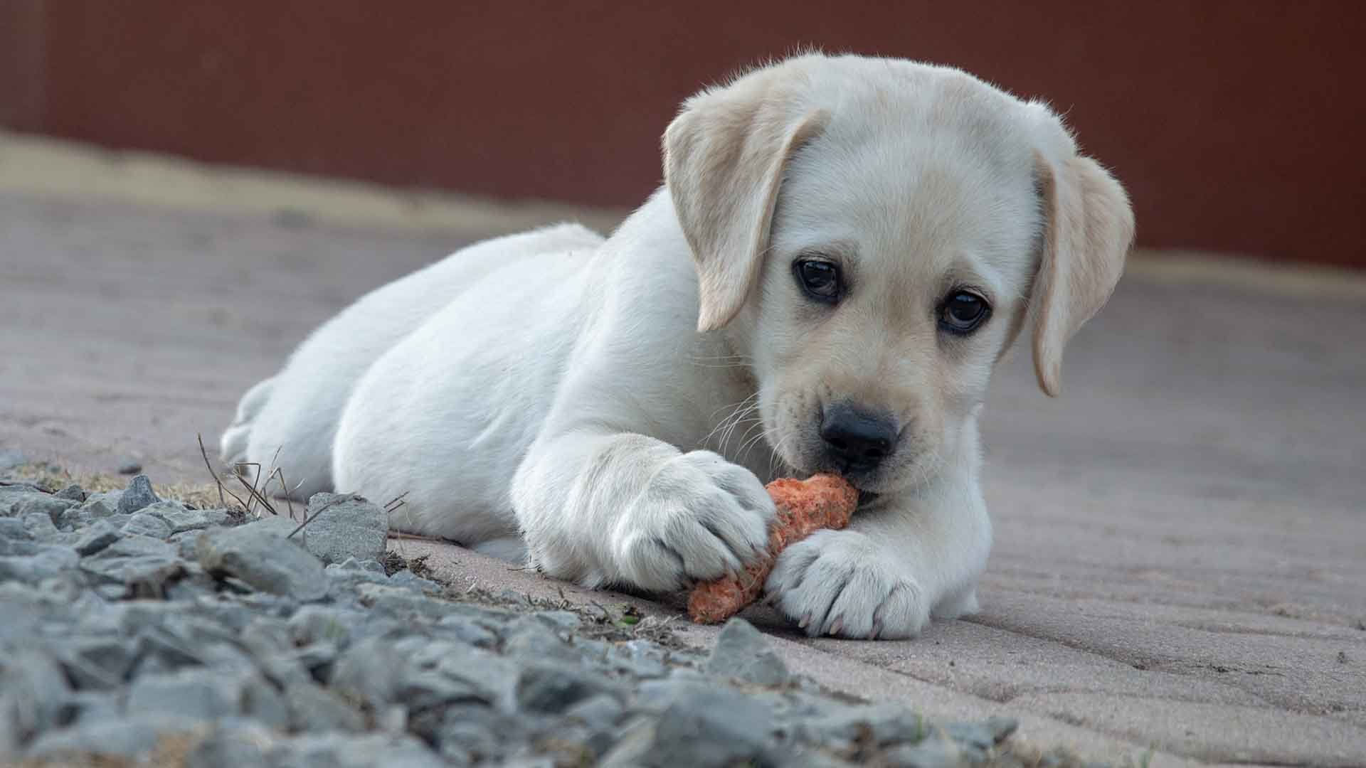 Best Dog Vitamins (2021): Reviews & Buying Guide