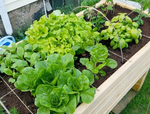 Cultivate Plants in Tight Spaces With Square Foot Gardening | Make: