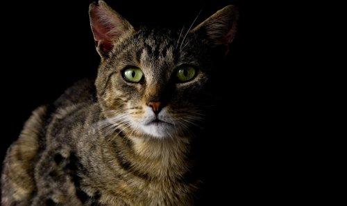 Purrsday Poetry: Feline - Katzenworld