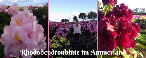 Rhododendronblüte im Ammerland - The Road Most Traveled