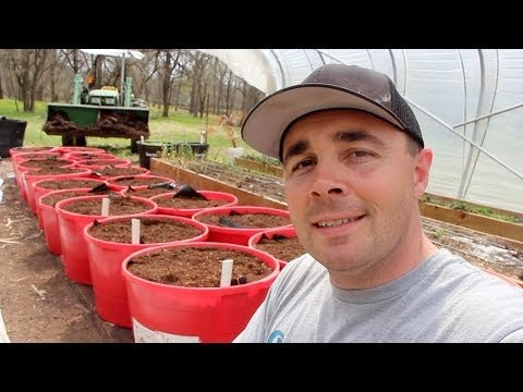 Easy to build self-watering containers | Boing Boing