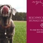 Calming Signals – Beschwichtigungssignale bei Hunden