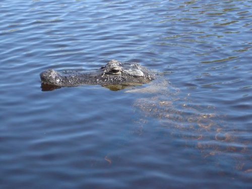 Fun Things to Do in the Everglades in Ochopee Florida