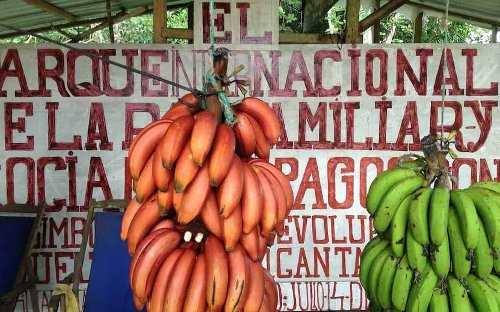 Food in the Galapagos Islands