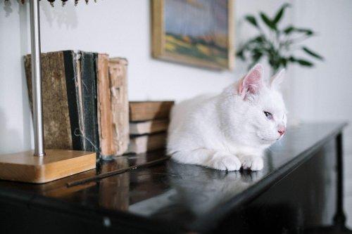 When Did Cats Become Popular Pets? - Katzenworld