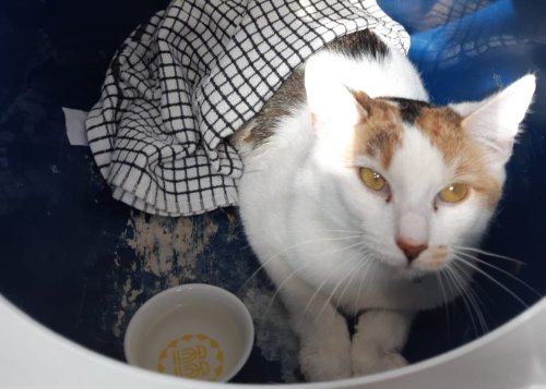 Dumped Cat Sees Fate Intervene When her Finders Fall in Love With Her! - Katzenworld