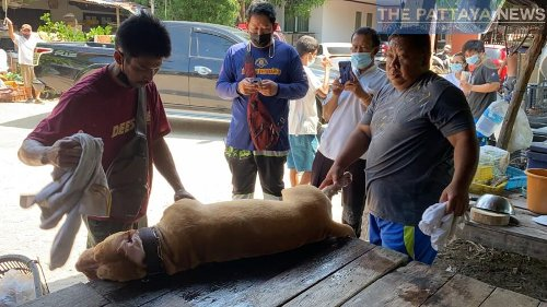 UPDATE: Owner passes away after being attacked in Pattaya area by his pitbull yesterday - The Pattaya News