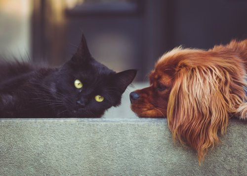 Have Cats Become More Affectionate in Lockdown? New Research Shows the Impact of the Pandemic on Pets - Katzenworld