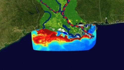 Shrinking the Gulf of Mexico's Massive 'Dead Zone'