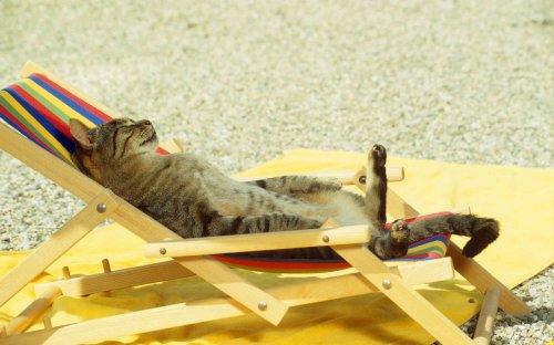 Keeping Pets Safe During a Heatwave by PDSA - Katzenworld