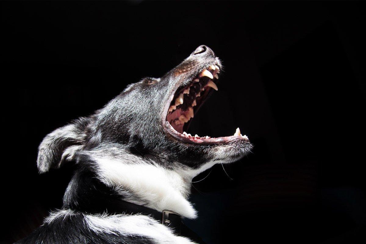 11 Reasons Why Dogs Bark at Night