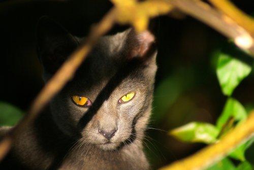Purrsday Poetry: Feline Mystery - Katzenworld