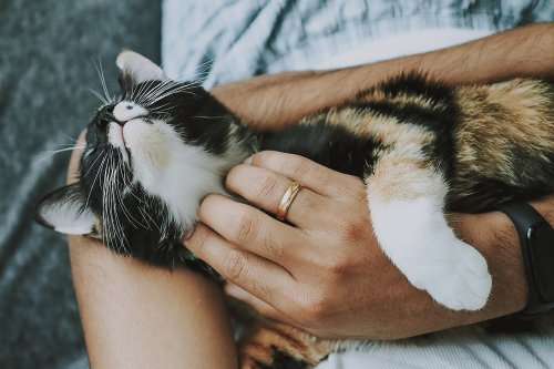 Cat Fight or Feline the Love? New Research Analyses the Relationship Between Cats and Their Owners - Katzenworld