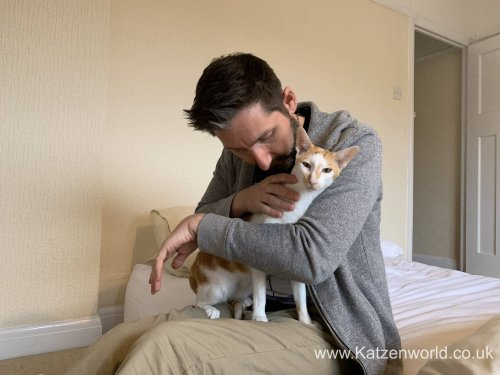 How to Help Your Pets with Post Lockdown Anxiety - Katzenworld