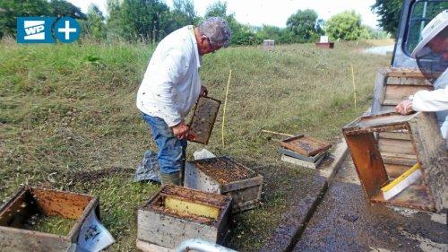 Wetter: Flut zerstört 30 Bienenvölker und eine Tonne Honig