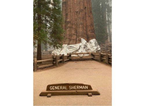Weather slows wildfire near California's giant sequoia trees