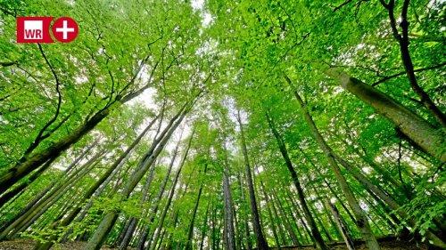 Waldbaden im Arnsberger Wald ein Modetrend? Ein Gespräch