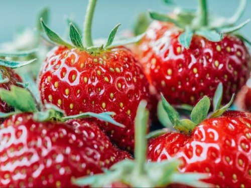 Ready for strawberries? Pick-your-own fields are open