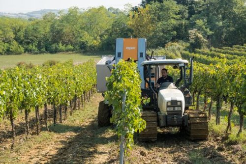 Robots Take Over Italy's Vineyards Amid Worker Shortages