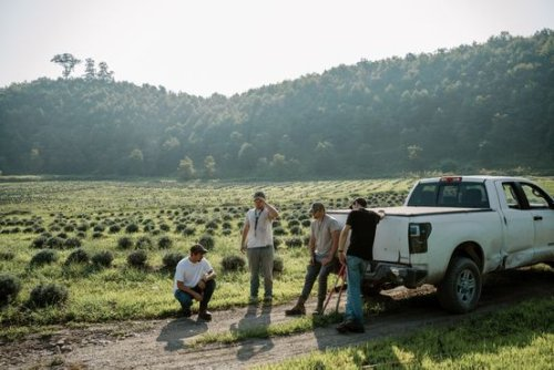 West Virginia Creates Jobs Farming Lavender at Former Coal Mines