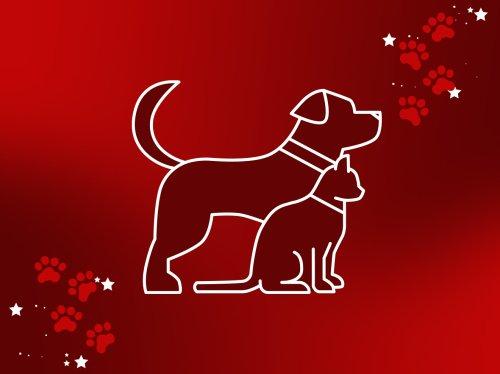 Das Haustier-Horoskop für die Woche vom 25. bis 31. Oktober 2021