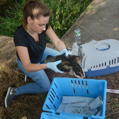 Tierschutz in Nettetal: BUND fordert Bürgermeister zum Umdenken bei Wildtierschutz auf