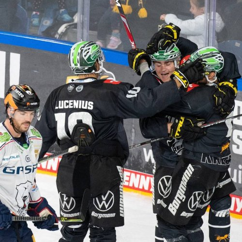 Eishockey: Analyse: Krefeld Pinguine sind auf dem richtigen Weg